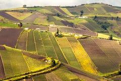 Agricoltura ripida della valle Fotografia Stock Libera da Diritti