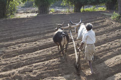 Agricoltura rurale Fotografie Stock