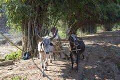 Agricoltura rurale Fotografia Stock