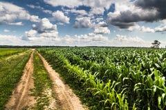 Agricoltura rurale che coltiva paesaggio Immagine Stock