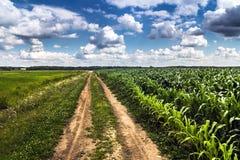 Agricoltura rurale che coltiva paesaggio immagini stock