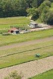 Agricoltura rurale della natura scenica Fotografia Stock