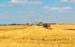 Agricoltura in Russia Il grano crescente Fotografie Stock Libere da Diritti