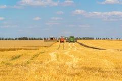 Agricoltura in Russia Il grano crescente Immagini Stock Libere da Diritti