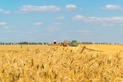 Agricoltura in Russia Il grano crescente Immagine Stock