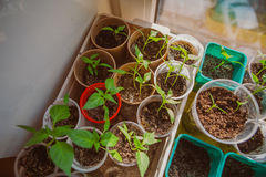 Agricoltura, seminante, concetto crescente del seme della pianta Immagini Stock