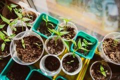 Agricoltura, seminante, concetto crescente del seme della pianta Fotografia Stock Libera da Diritti