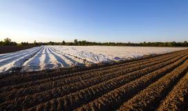Agricoltura (serre) Immagini Stock