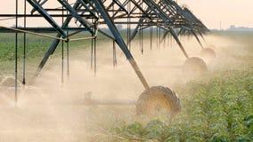 Agricoltura, sistema di innaffiatura del giacimento della soia nel tramonto Immagini Stock