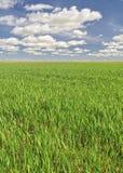 Agricoltura sostenibile. Immagini Stock