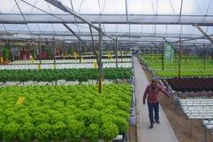 Agricoltura sostenibile Fotografia Stock Libera da Diritti