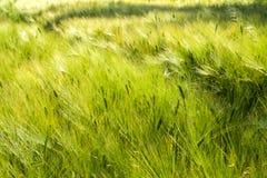 Agricoltura sostenibile Immagini Stock