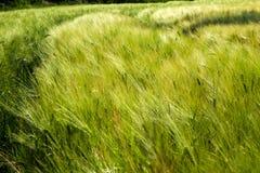 Agricoltura sostenibile nei paesi dell'Europa orientale Immagini Stock