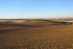 Agricoltura spagnola Immagine Stock