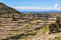 Agricoltura su Isla del Sol sul Titicaca in Bolivia Fotografia Stock Libera da Diritti