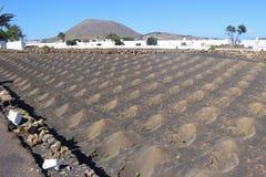Agricoltura su Lanzarote, isole Canarie, Spagna Fotografie Stock