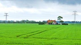 Agricoltura su terra ripresa dal vedere Immagine Stock