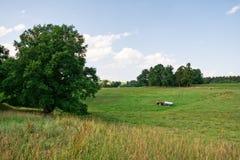 Agricoltura su un campo Immagini Stock