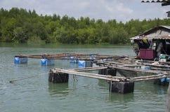 Agricoltura subacquea della gabbia del pesce dei pesci o pesce allevato in gabbia netta Immagini Stock