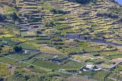 Agricoltura sul Madera (Portogallo) Immagini Stock Libere da Diritti