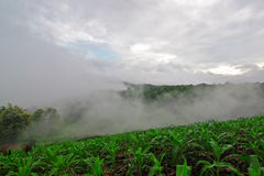 Agricoltura sul plateau e sulla foschia sulla mattina Immagini Stock