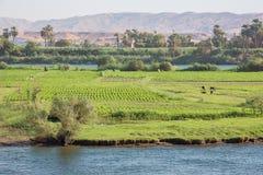 Agricoltura sull'isola di Armant immagine stock