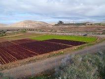 Agricoltura sull'isola Fuerteventura in Spagna Immagine Stock