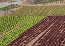 Agricoltura sull'isola Fuerteventura in Spagna Fotografie Stock
