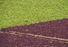 Agricoltura sull'isola Fuerteventura in Spagna Immagine Stock Libera da Diritti