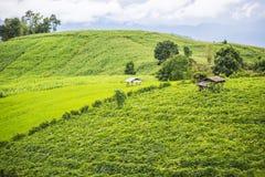 Agricoltura sulla collina nel PA Pong Pieng Chiang Mai, Tailandia Fotografie Stock