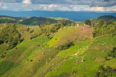 Agricoltura sulla montagna Immagine Stock Libera da Diritti