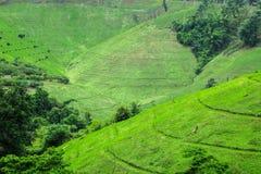 Agricoltura sulla montagna Fotografia Stock