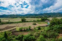 Agricoltura sulla montagna in foresta con foschia ed il cielo nuvoloso Immagine Stock