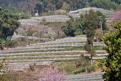 Agricoltura sulle montagne. Fotografia Stock
