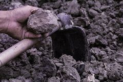 Agricoltura: Suolo in mani dell'uomo dell'agricoltore con la zappa delle sedere nere del suolo fotografia stock libera da diritti