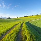 Agricoltura in Svizzera Immagini Stock Libere da Diritti