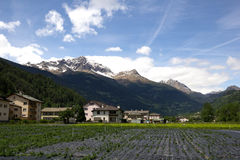 Agricoltura in Svizzera Immagine Stock Libera da Diritti