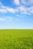 Agricoltura svizzera - campo di erba verde con la bella nuvola - Immagini Stock