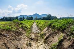 Agricoltura tailandese Fotografie Stock Libere da Diritti