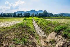Agricoltura tailandese Fotografia Stock