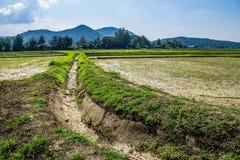 Agricoltura tailandese Immagine Stock