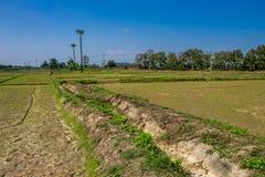 Agricoltura tailandese Immagine Stock Libera da Diritti