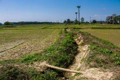 Agricoltura tailandese Immagini Stock