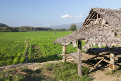 Agricoltura in Tailandia Fotografia Stock