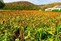 Agricoltura in Tailandia del Nord Fotografia Stock Libera da Diritti