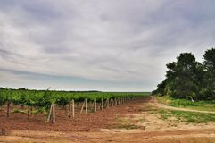 Agricoltura in Taman Fotografie Stock Libere da Diritti