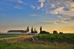 Agricoltura in Taman Fotografia Stock Libera da Diritti
