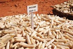 Agricoltura in Tanzania Fotografia Stock
