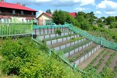 Agricoltura a terrazze Immagini Stock Libere da Diritti