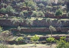 Agricoltura a terrazze Immagini Stock